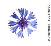 Polygonal Blue Cornflower ...