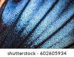 wings of butterflies at high... | Shutterstock . vector #602605934