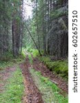 dirty clay road in a coniferous ... | Shutterstock . vector #602657510