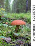 mushroom with a red hat grows... | Shutterstock . vector #602657519