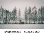 Cold Winter Forest In Mist Wit...