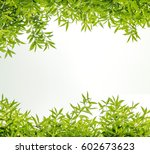 green leaf frame on white... | Shutterstock . vector #602673623