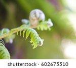fern outdoors