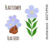 flax flower and seeds.... | Shutterstock .eps vector #602719934