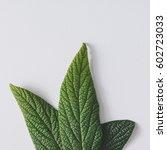 creative minimal arrangement of ... | Shutterstock . vector #602723033