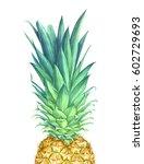 watercolor pineapple on white... | Shutterstock . vector #602729693