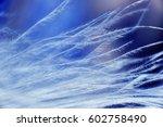 feather birds close up. macro... | Shutterstock . vector #602758490