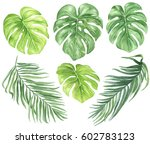 watercolor palm leaves set ... | Shutterstock . vector #602783123