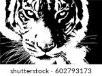 hand drawn tiger. natural... | Shutterstock .eps vector #602793173