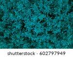 blue leaves background | Shutterstock . vector #602797949