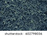 leaves background | Shutterstock . vector #602798036