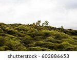 Moss Covered Lava Rocks And...