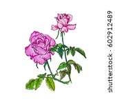 rose bouquet. vector...   Shutterstock .eps vector #602912489