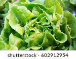 organic vegetable farms for...   Shutterstock . vector #602912954