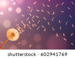 dandelion in sunlight releasing ... | Shutterstock . vector #602941769