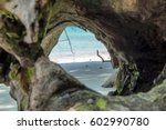 Clear Sea Beach In Hollow Tree