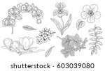 tropical flowers set with... | Shutterstock .eps vector #603039080