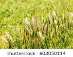 closeup of grass  natural... | Shutterstock . vector #603050114
