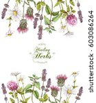 vector healing flowers and... | Shutterstock .eps vector #603086264