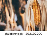 dried corns | Shutterstock . vector #603102200