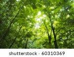 sunbeam shine through the green ... | Shutterstock . vector #60310369
