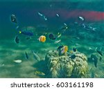 Tropical Fish Shoal Near Young...