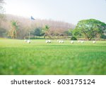 golf course | Shutterstock . vector #603175124