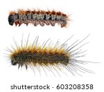 larvae  caterpillars  of pine... | Shutterstock . vector #603208358