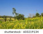 yellow flower with beautiful sky | Shutterstock . vector #603219134