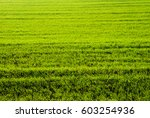 agricultural field | Shutterstock . vector #603254936