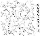 vector set of ink drawing birds ... | Shutterstock .eps vector #603261968