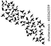 bird flock  vector flying birds ...   Shutterstock .eps vector #603262559