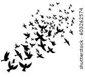 bird flock  vector flying birds ... | Shutterstock .eps vector #603262574