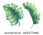 set of big tropical green leaf...   Shutterstock . vector #603277484