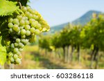grapes on vine stock at wine... | Shutterstock . vector #603286118