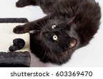 Stock photo sweet black cat with play post 603369470