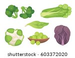 set vector cabbage and lettuce. ... | Shutterstock .eps vector #603372020