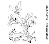 hand drawn flowers lilies on a... | Shutterstock .eps vector #603401984