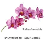 Watercolor Orchids. Hand...