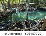 emerald pool or tha pom klong...   Shutterstock . vector #603467720