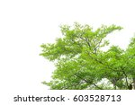 green leaves isolated on white... | Shutterstock . vector #603528713