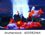 beautiful goldfish in aquarium | Shutterstock . vector #603582464