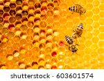 Closeup of bees on honeycomb in ...