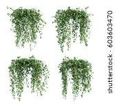 3d rendering of  epipremnum... | Shutterstock . vector #603603470
