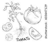 hand drawn illustration set of... | Shutterstock .eps vector #603647129