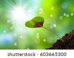 growing clover leaf against sun | Shutterstock . vector #603665300