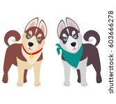 domestic siberian husky breed... | Shutterstock .eps vector #603666278