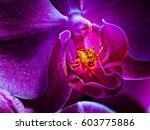 fine art detailed fiery glowing ... | Shutterstock . vector #603775886