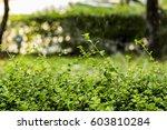 watering tree | Shutterstock . vector #603810284