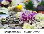Many Thai Coins And Violet ...
